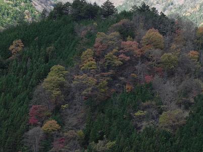三峰花街道から見た紅葉