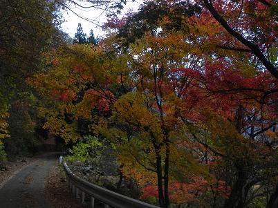 雲取林道の紅葉