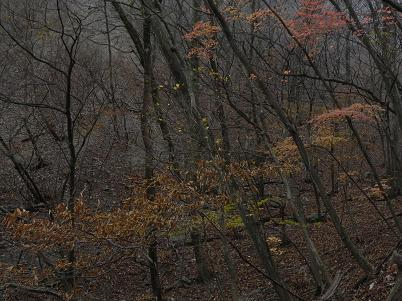 ウノタワ終盤の紅葉・黄葉