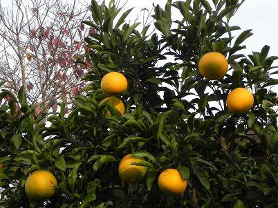 キヨミフルーツ