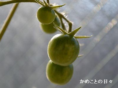DSC_0524-toma.jpg