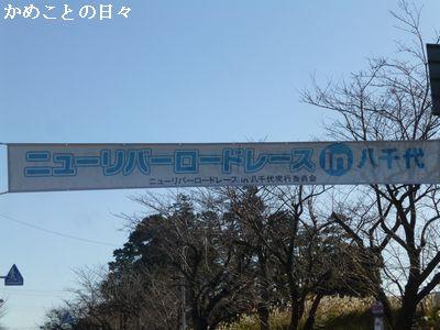 P1150994-y.jpg