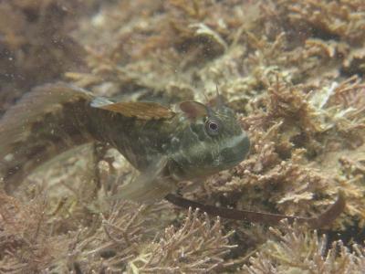 06-10 カエルウオ