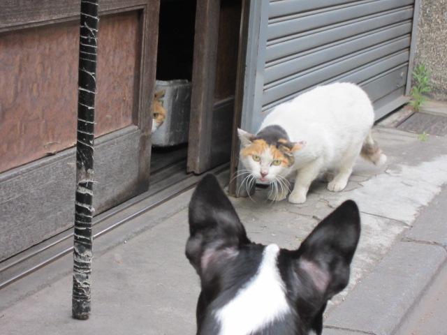 vs猫×2
