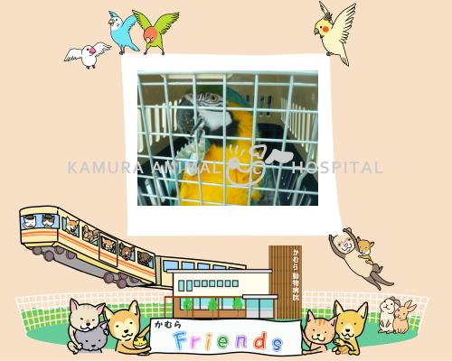 2013friendsTOPイメージ