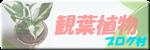 にほんブログ村 花・園芸ブログ 観葉植物へ