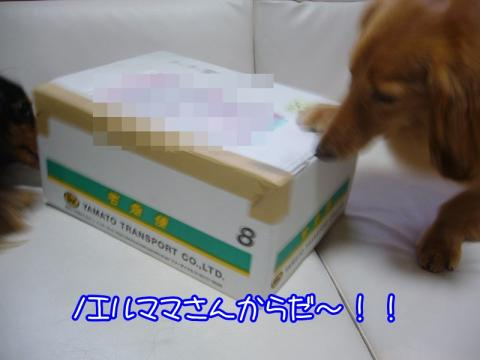 P1140837.jpg