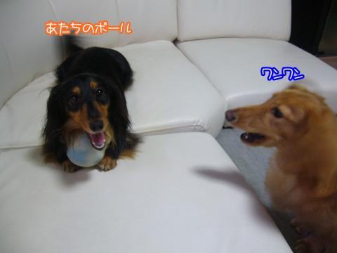 P1150081.jpg