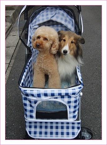 犬カート3代目