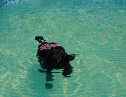 くーちゃん泳ぐ