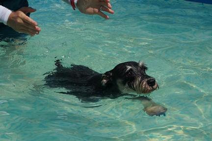 ぴーくん泳ぐ