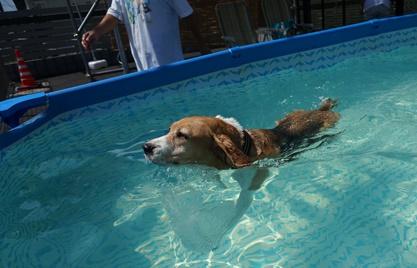 ひなちゃん泳ぐ