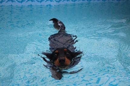 うめくん泳ぐ