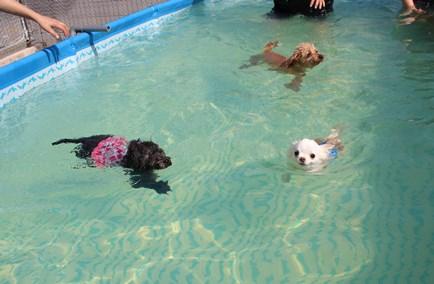 みんなで泳ぐよ