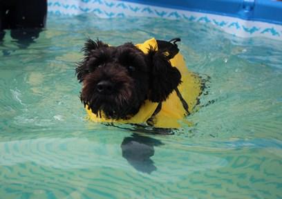 ぐらんくん泳ぐ