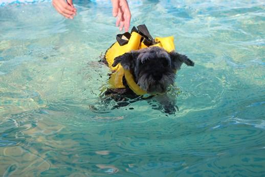カレルちゃん泳ぐ