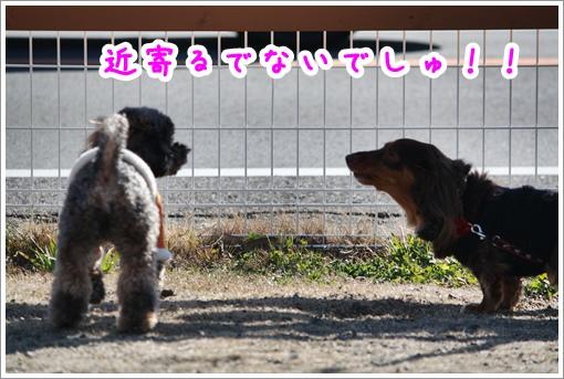 IMG_2437.jpg