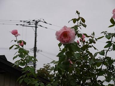 20130915キャサリンモーリー2