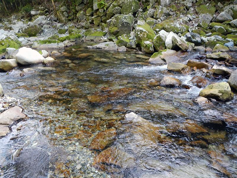 渓流ミノーイング