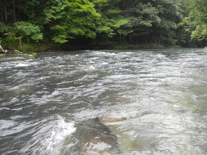 古座川支流の様子