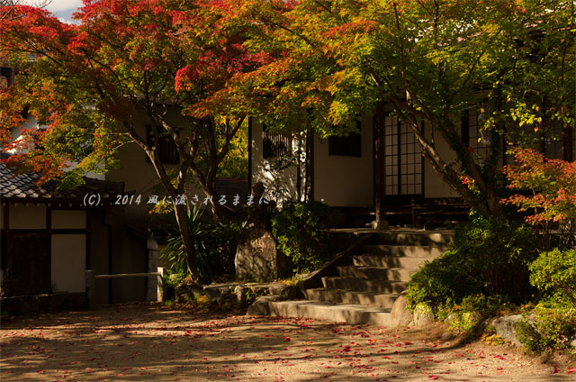 2014年11月 大阪・西江寺(さいこうじ)の紅葉1