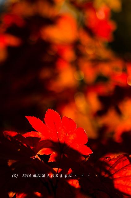 2014年11月 大阪・西江寺(さいこうじ)の紅葉15