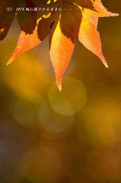 2014年11月 大阪・西江寺(さいこうじ)の紅葉5