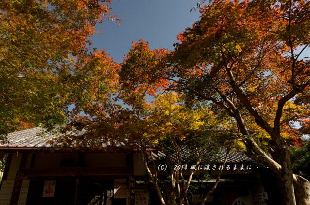 2014年11月 大阪・西江寺(さいこうじ)の紅葉7
