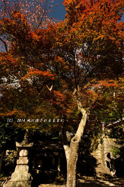 2014年11月 大阪・西江寺(さいこうじ)の紅葉8