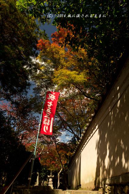 2014年11月 大阪・西江寺(さいこうじ)の紅葉9