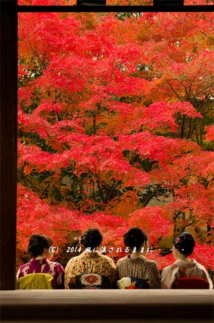 2014年11月 京都・南禅寺南禅寺 天授庵1