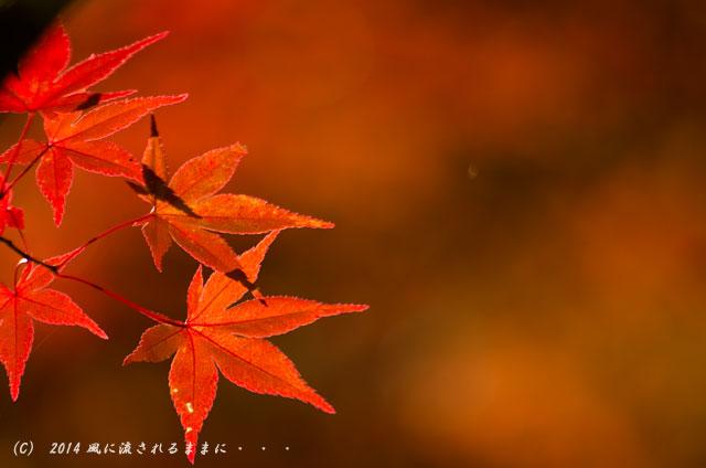 2014年11月 京都・亀岡 鍬山神社の紅葉14