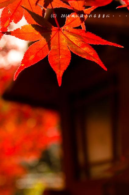 2014年11月 京都・亀岡 鍬山神社の紅葉3