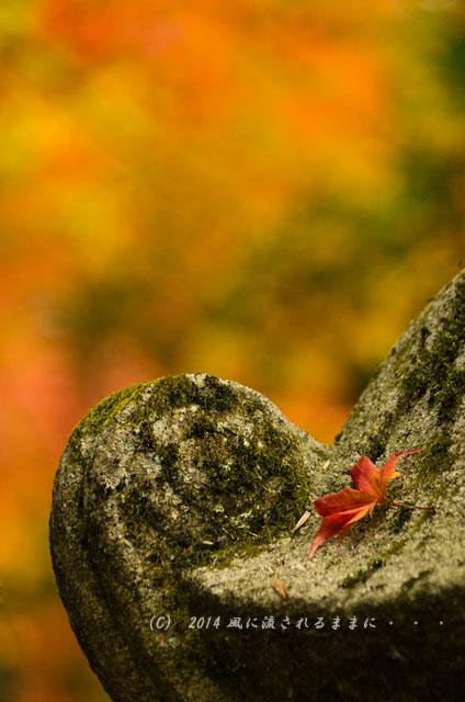 2014年11月 京都・亀岡 鍬山神社の紅葉5