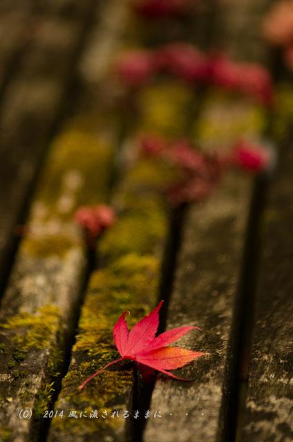 2014年11月 京都・亀岡 鍬山神社の紅葉8