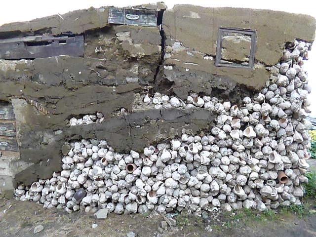 貝殻はイイダコ用のタコツボに使うんです