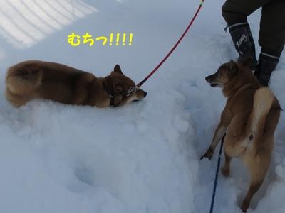 雪むっちー