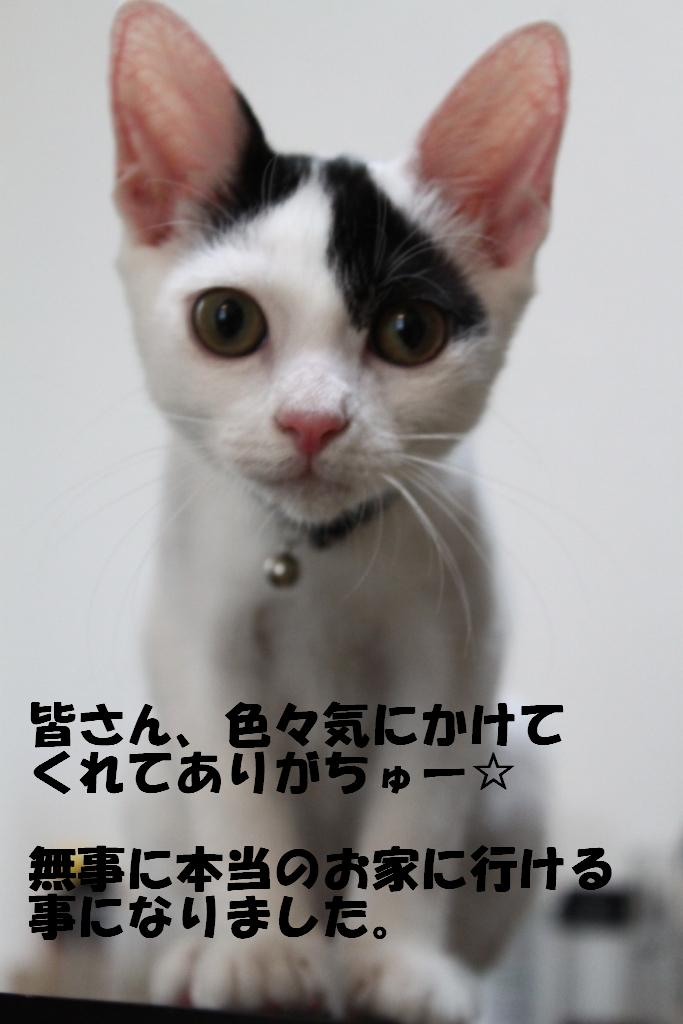 子猫-12