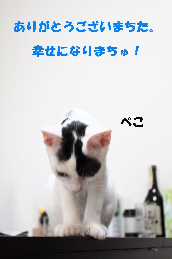 子猫-15