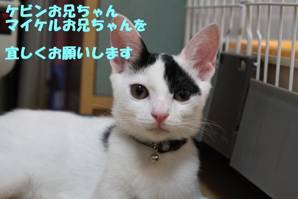 子猫-16
