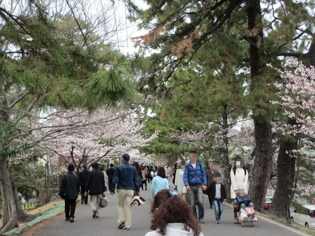 夙川公園2013-6