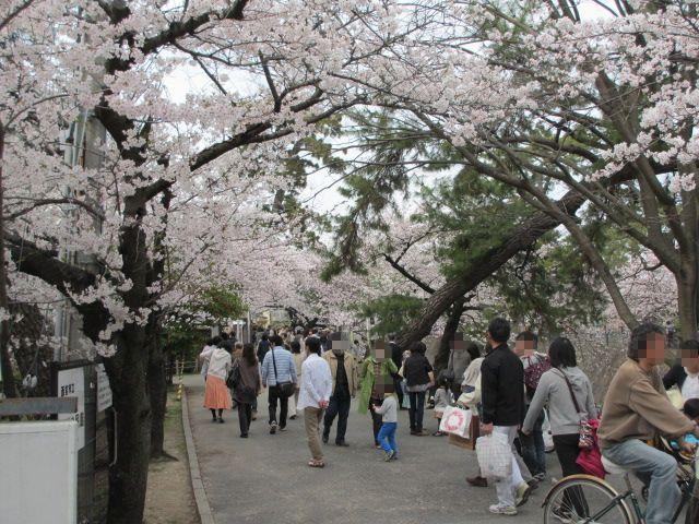 夙川公園2013-9