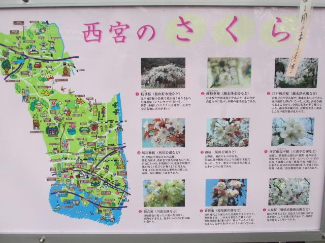 夙川公園2013-10