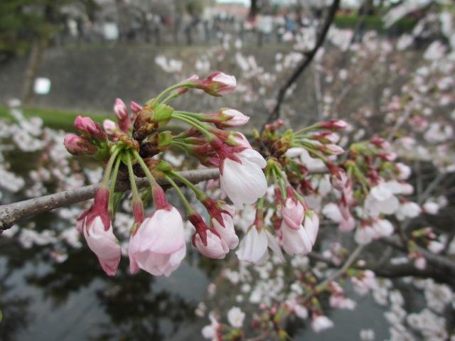 夙川公園2013-11