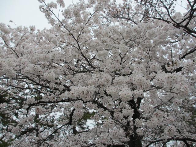 夙川公園2013-12