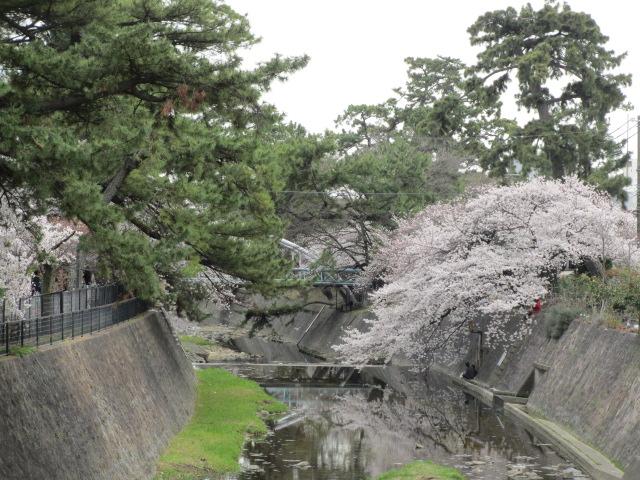夙川公園2013-14