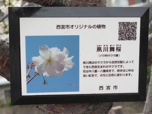 夙川公園2013-15