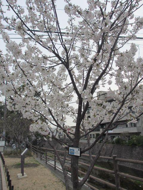 夙川公園2013-16