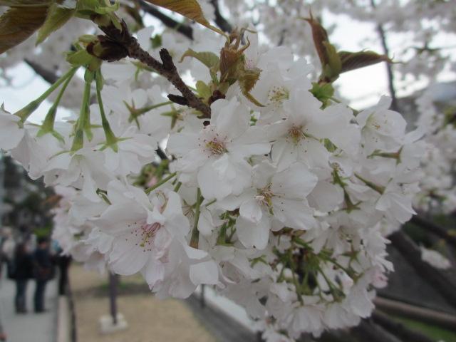 夙川公園2013-17