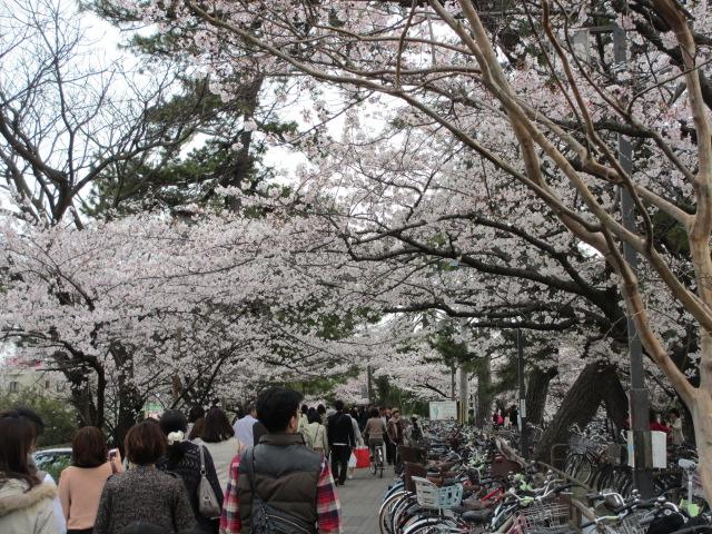 夙川公園2013-18